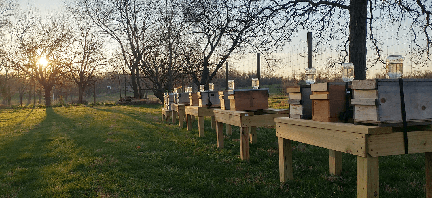 "Photo of the morning in the apiary of ""Her Majesty's Bees"""