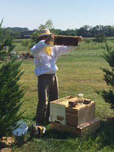 Photo of Bob in the Apiary